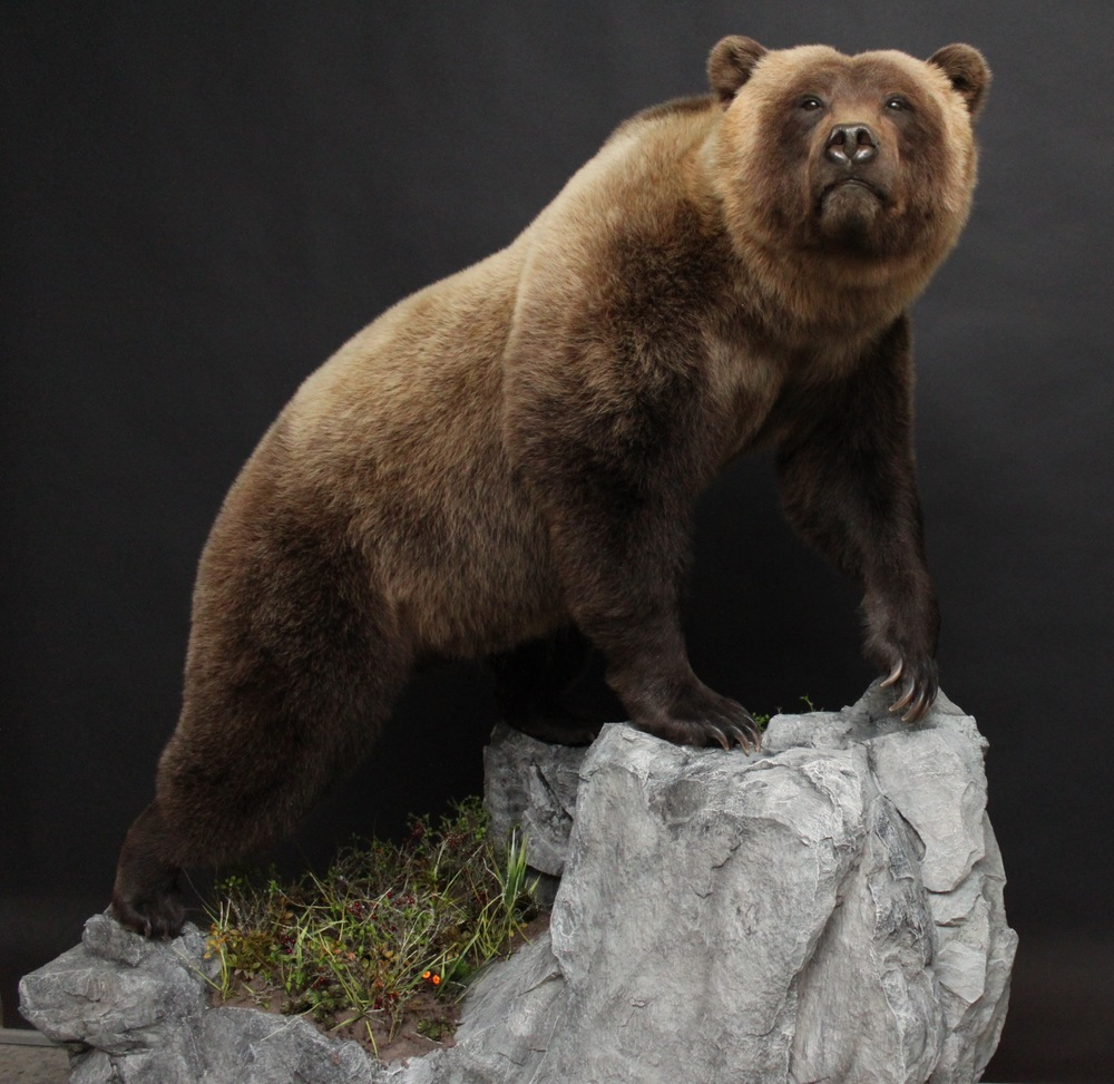 Lifesize  Grizzly (3)