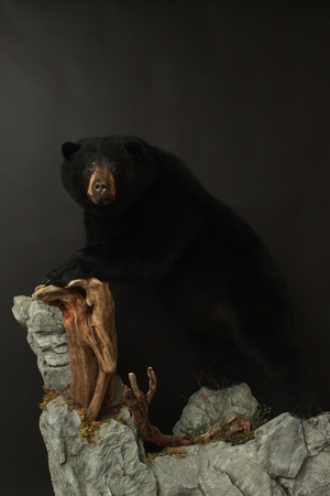 Lifesize rock and wood base  Black Bear (9)