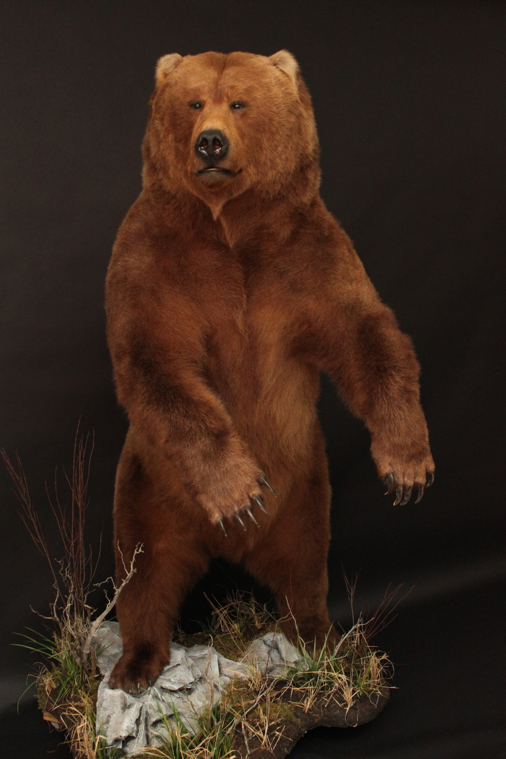 Lifesize  Grizzly (5)