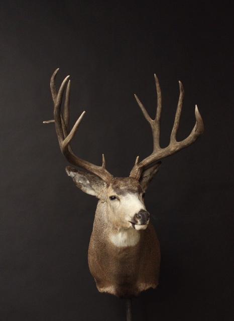 Allemund Buck.jpg