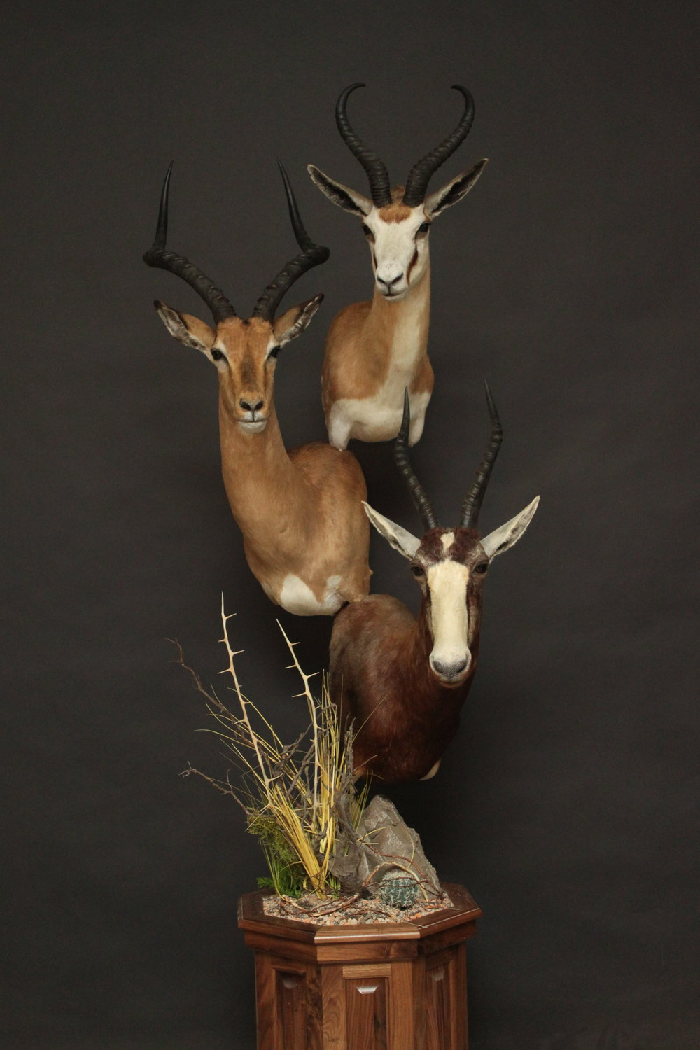 Triple Pedestal on Walnut  Springbok, Impala & Blesbok  Triple (2)