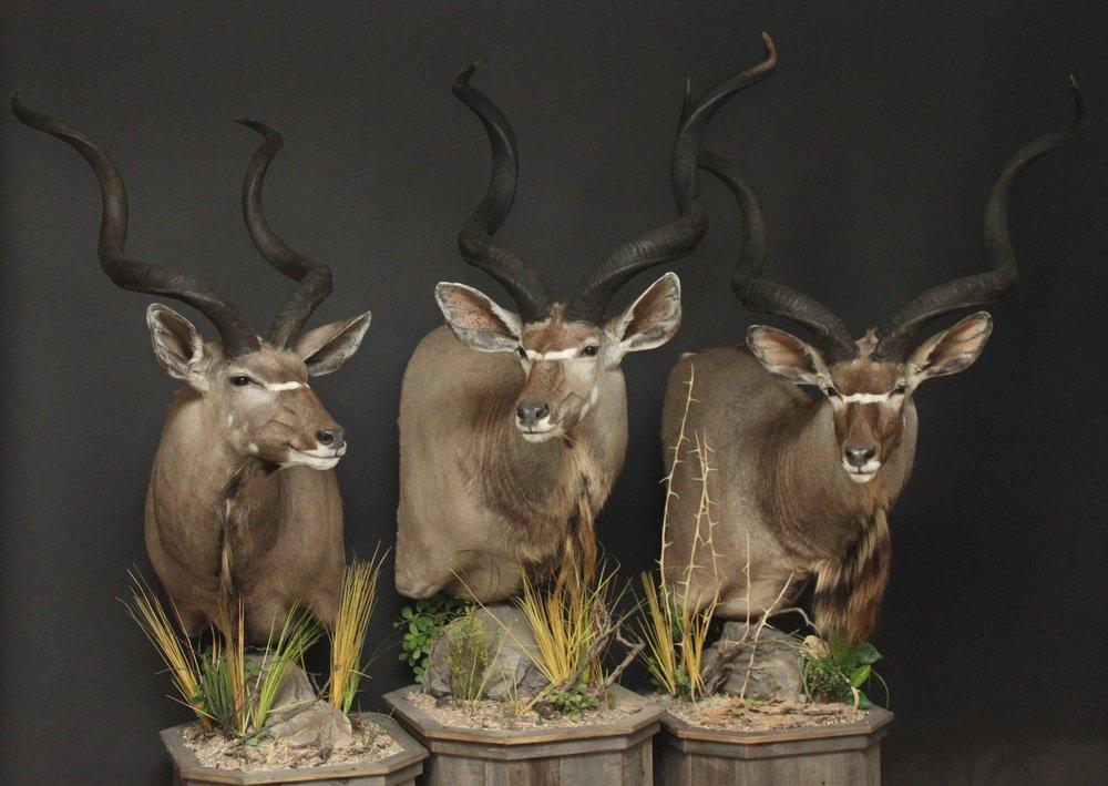 Barnboard Pedestals  Kudu