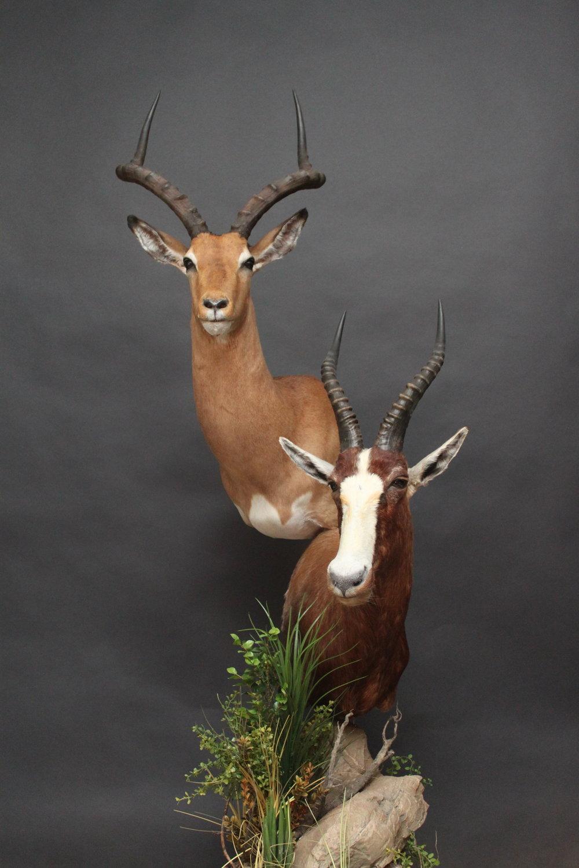 Double Pedestal  Impala & Blesbok  Double (8)