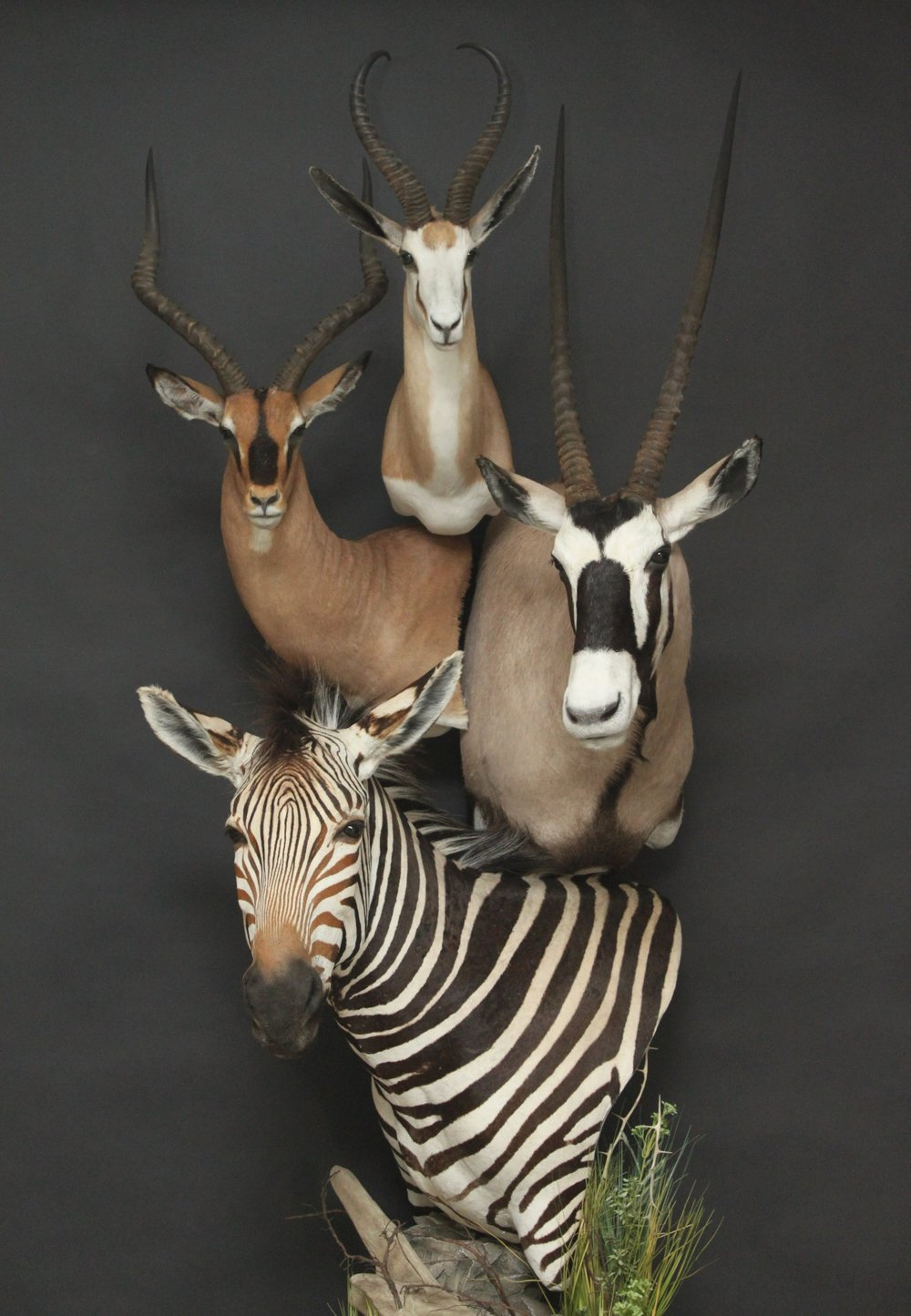 Quad Pedestal  Springbok, Impala, Gemsbok, Zebra  Quad (1)