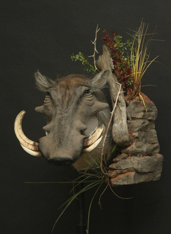 Wall Pedestal with custom rock and habitat  Warthog (9)