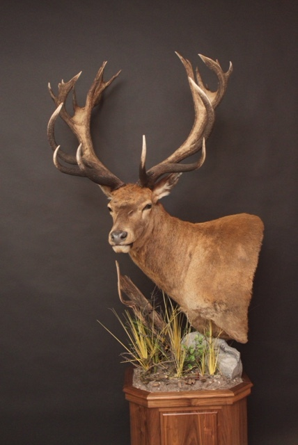 Pedestal on walnut  Red Stag (1)