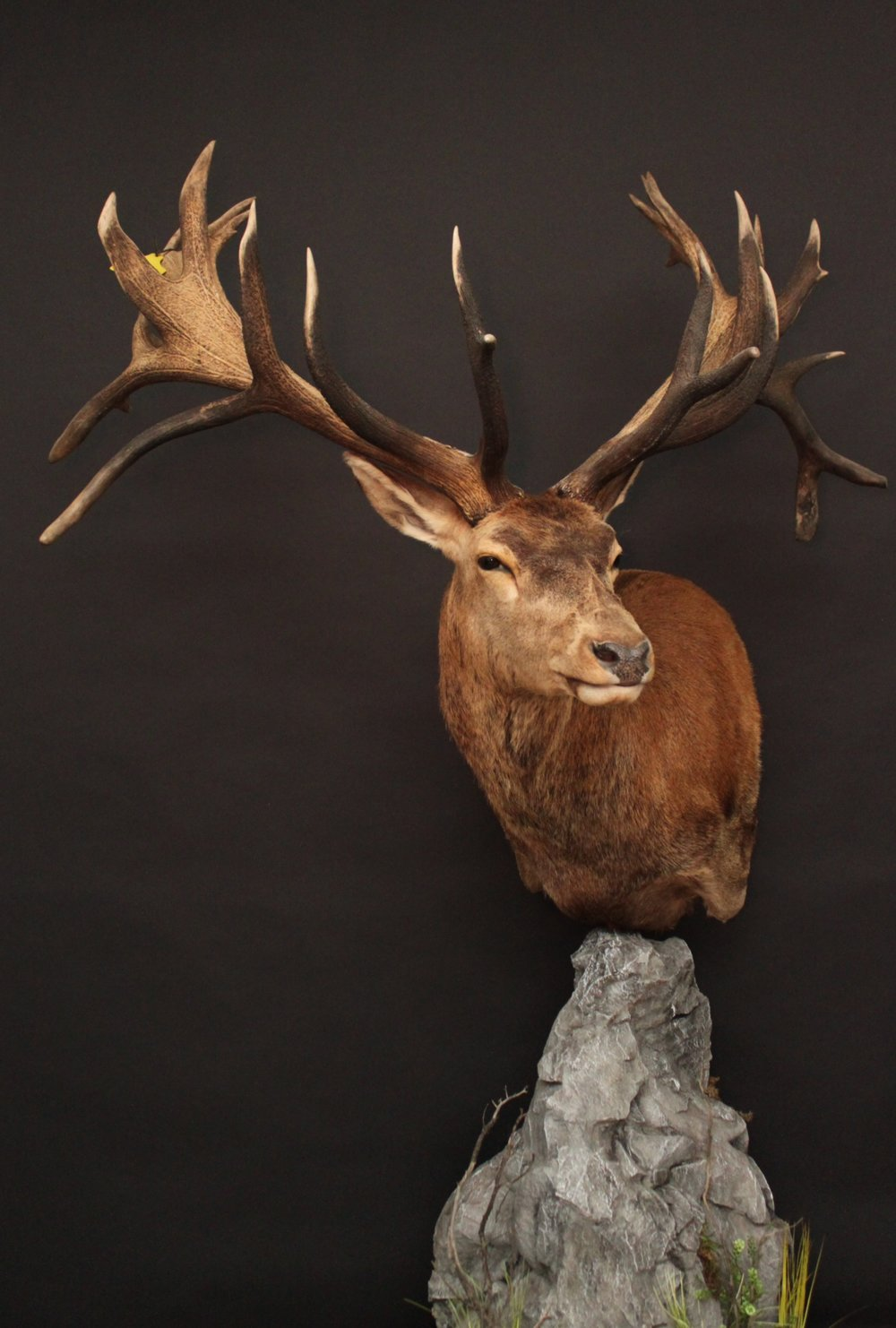 Pedestal on a custom rock base  Red Stag (2)
