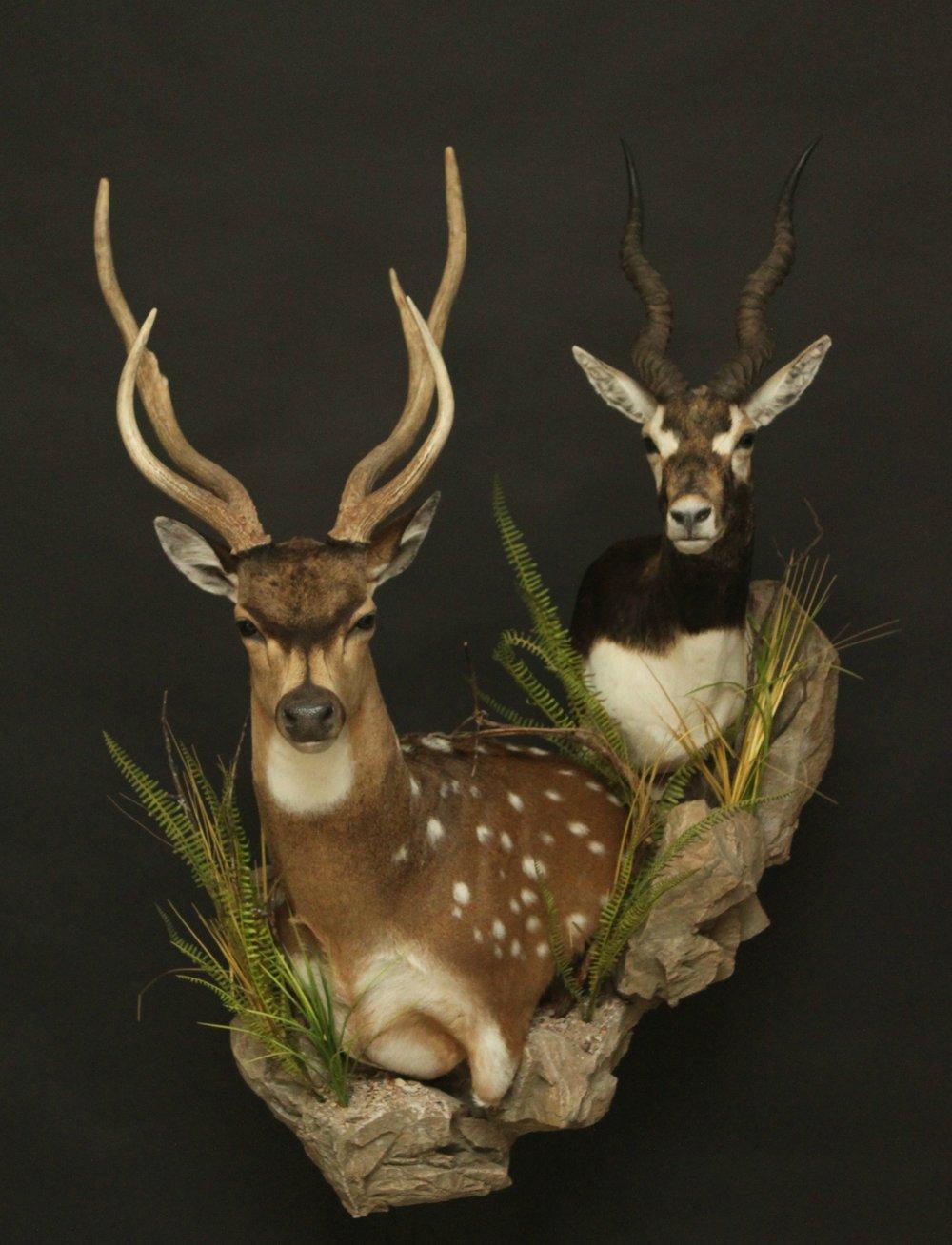 Double Wall Pedestal, custom base  Sitka Deer &  Double (3)