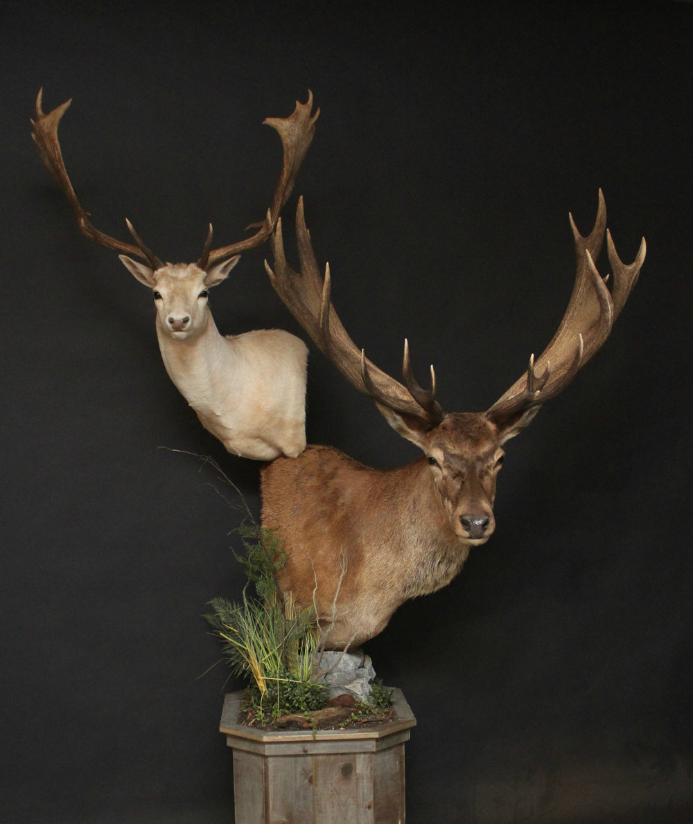 Double Pedestal on Barn Board  Fallow Deer & Red Stag  Double (1)