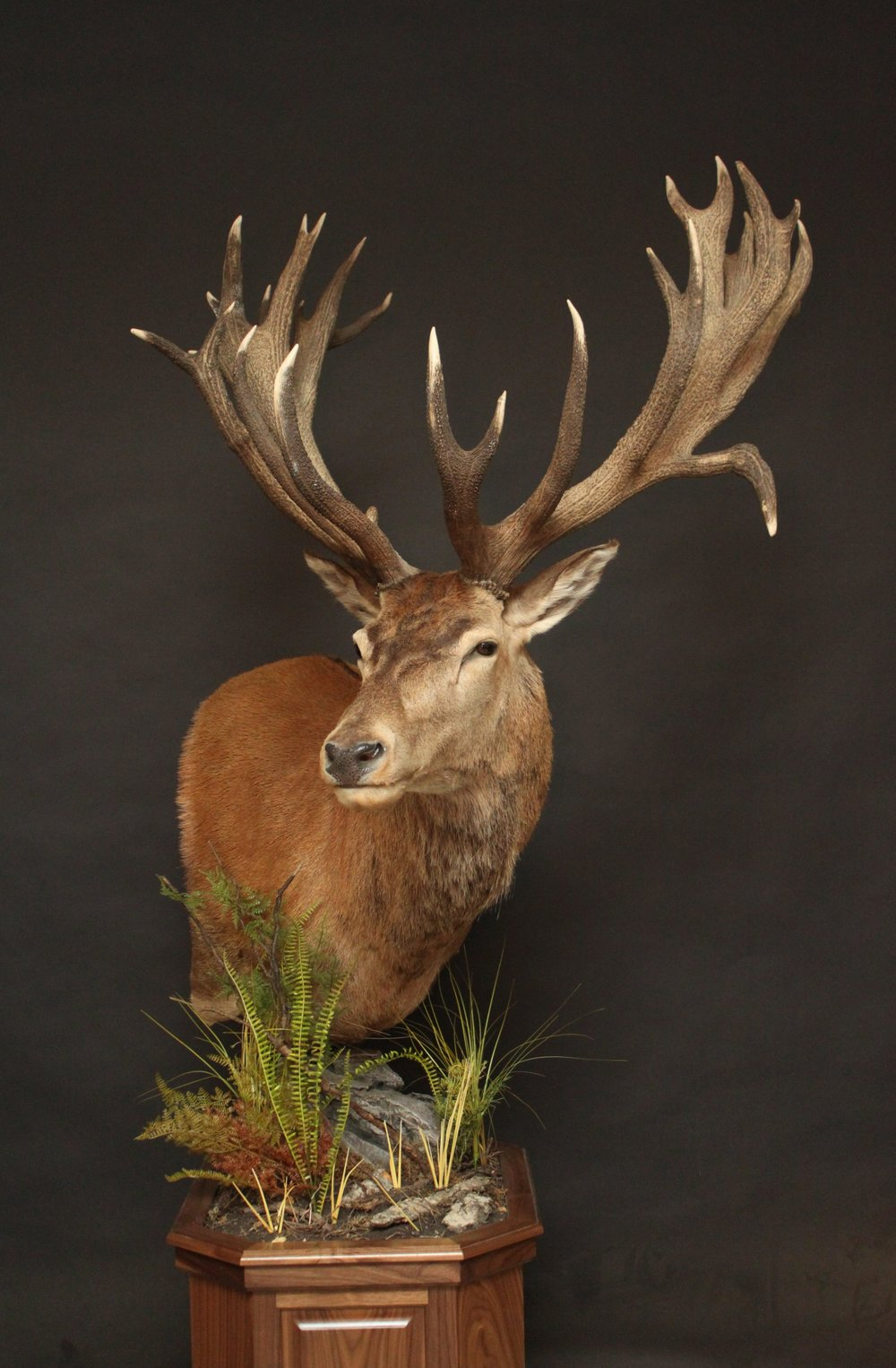 Pedestal on a walnut base  Red Stag (4)
