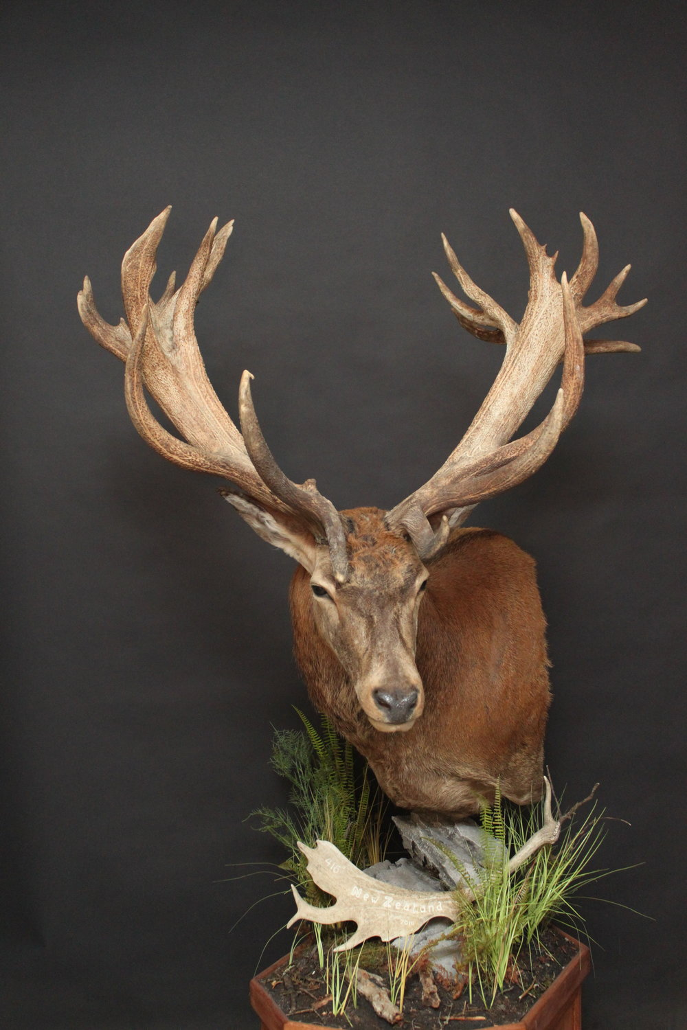 Red Stag (7)