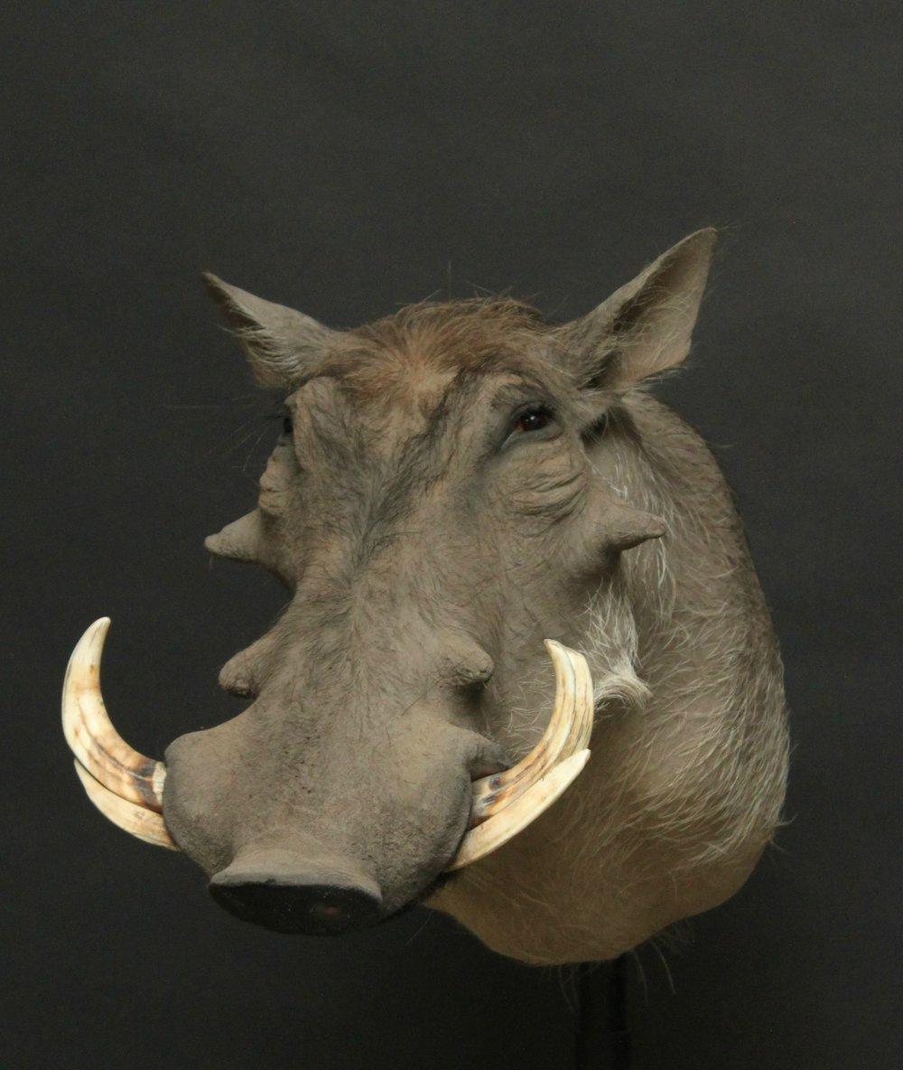 Shouldermount  Warthog (3)