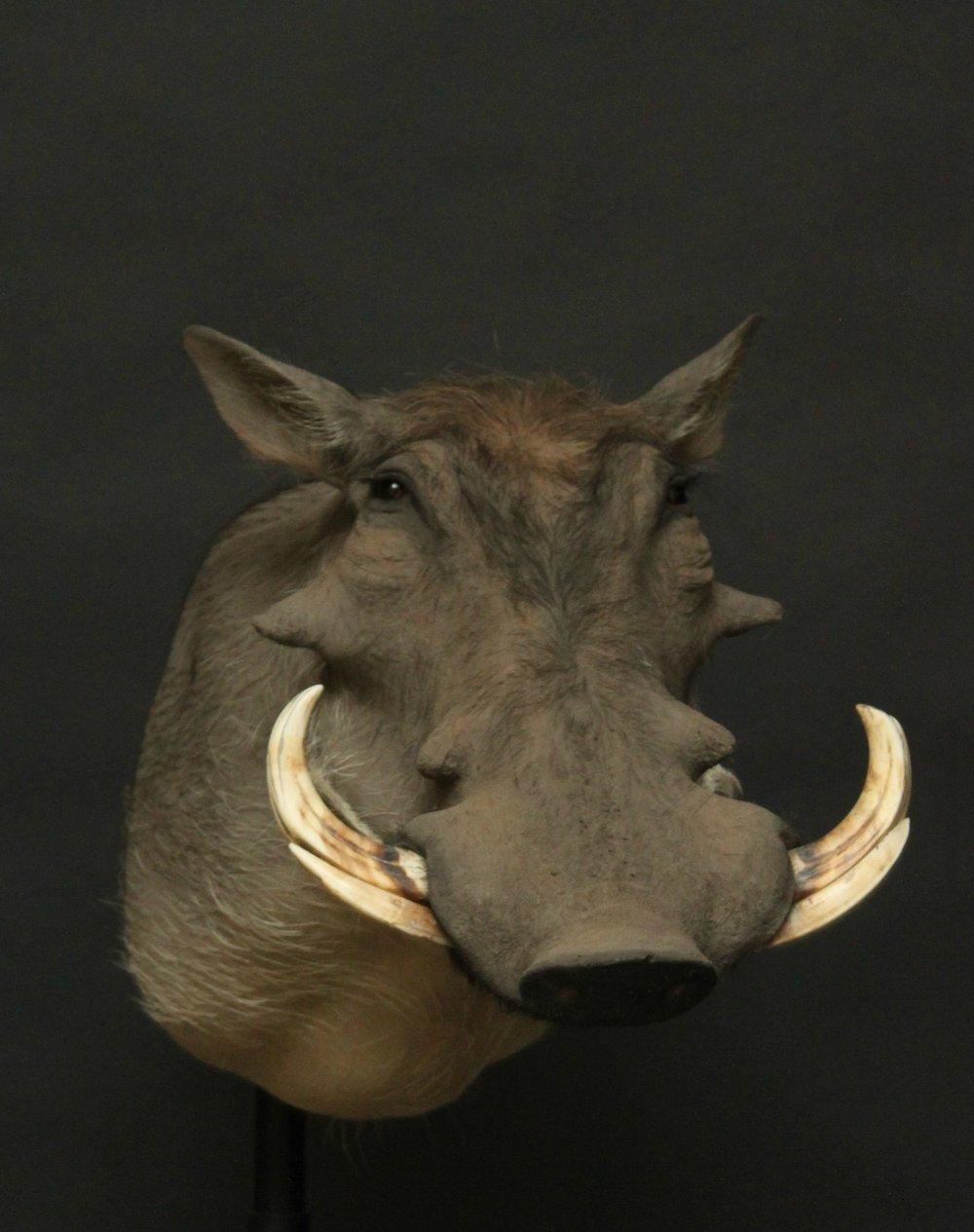 warthog (4).JPG