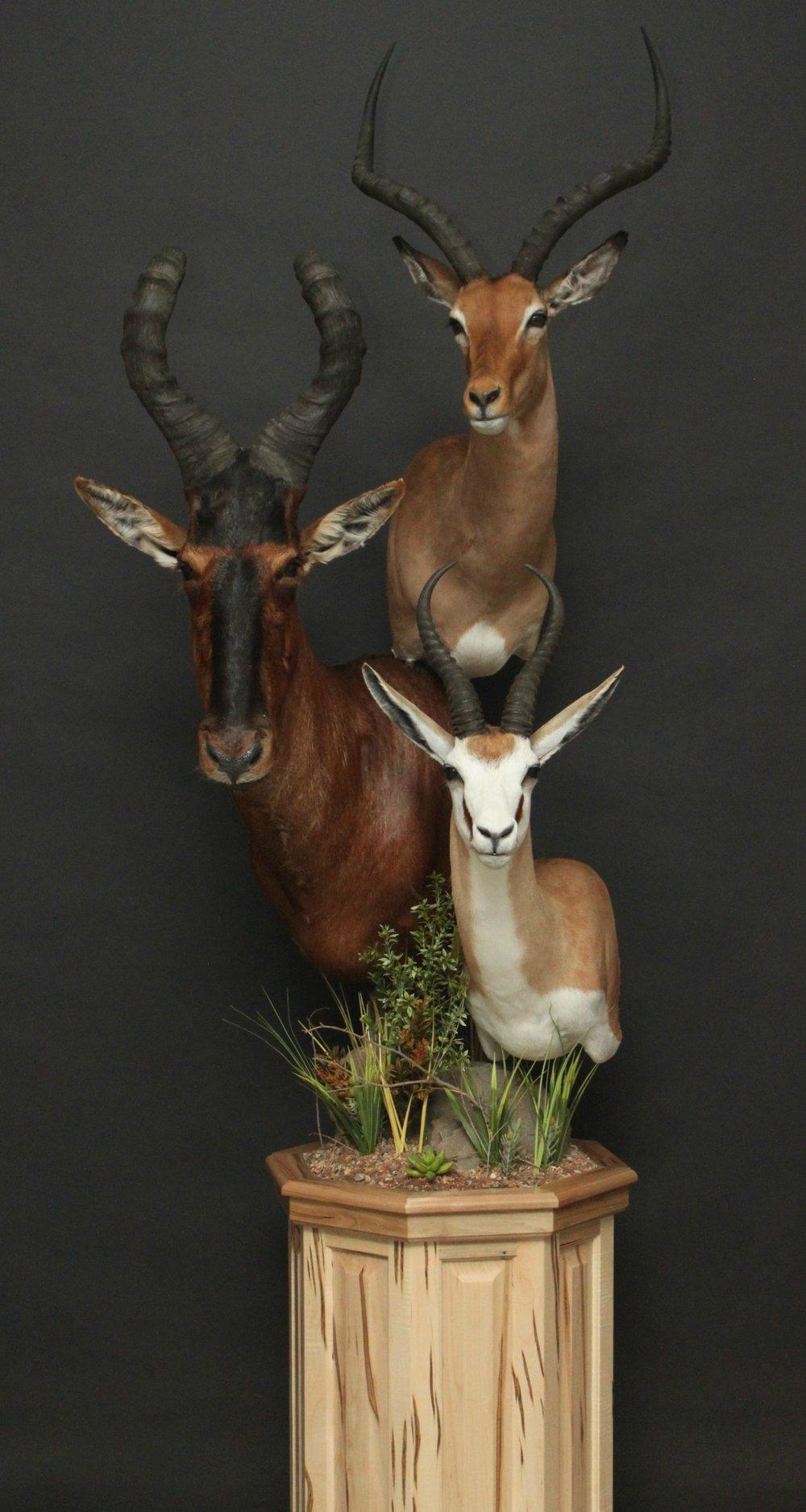 Triple Pedestal on Wormy Maple  Impala & Springbok  Triple (7)