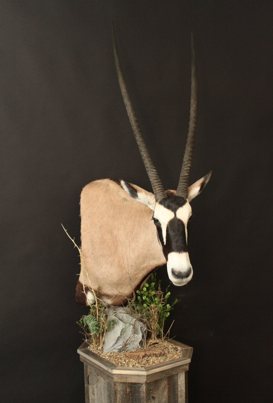 Barnboard Pedestal  Gemsbok (1)