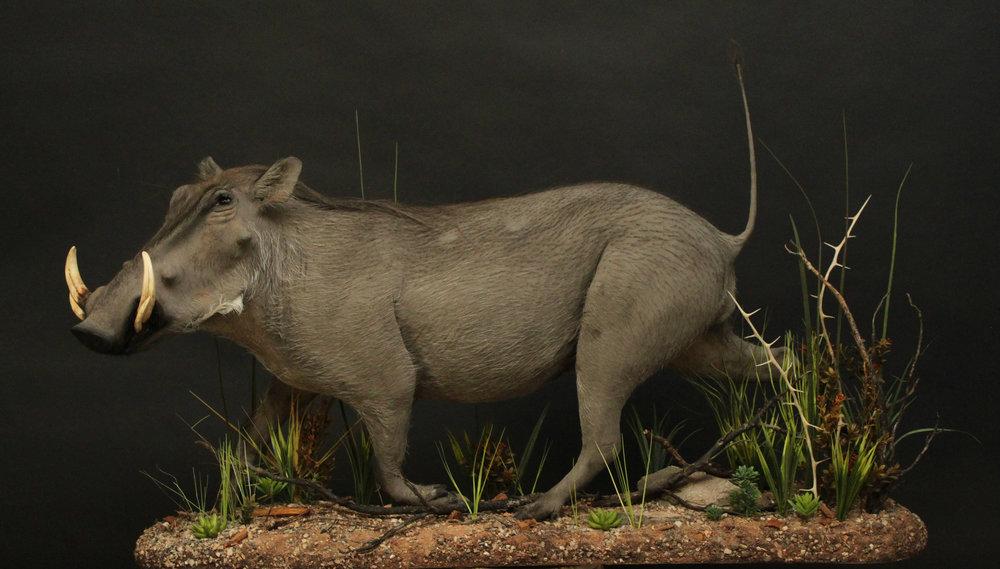 warthog (11).jpg