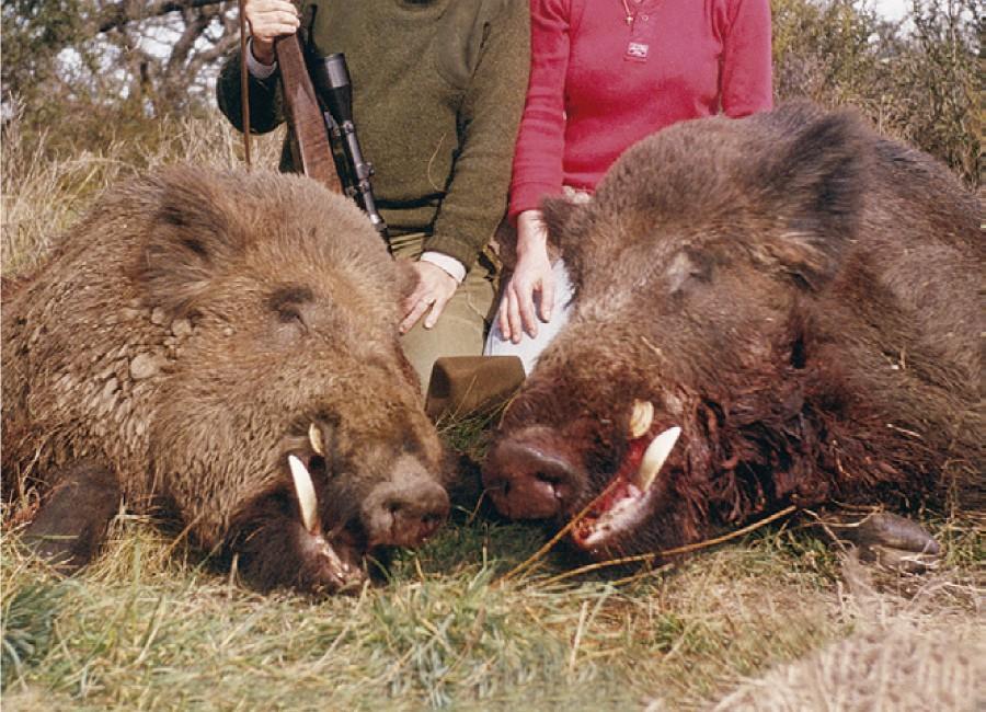 03-Wild-Boar-900x650.jpg