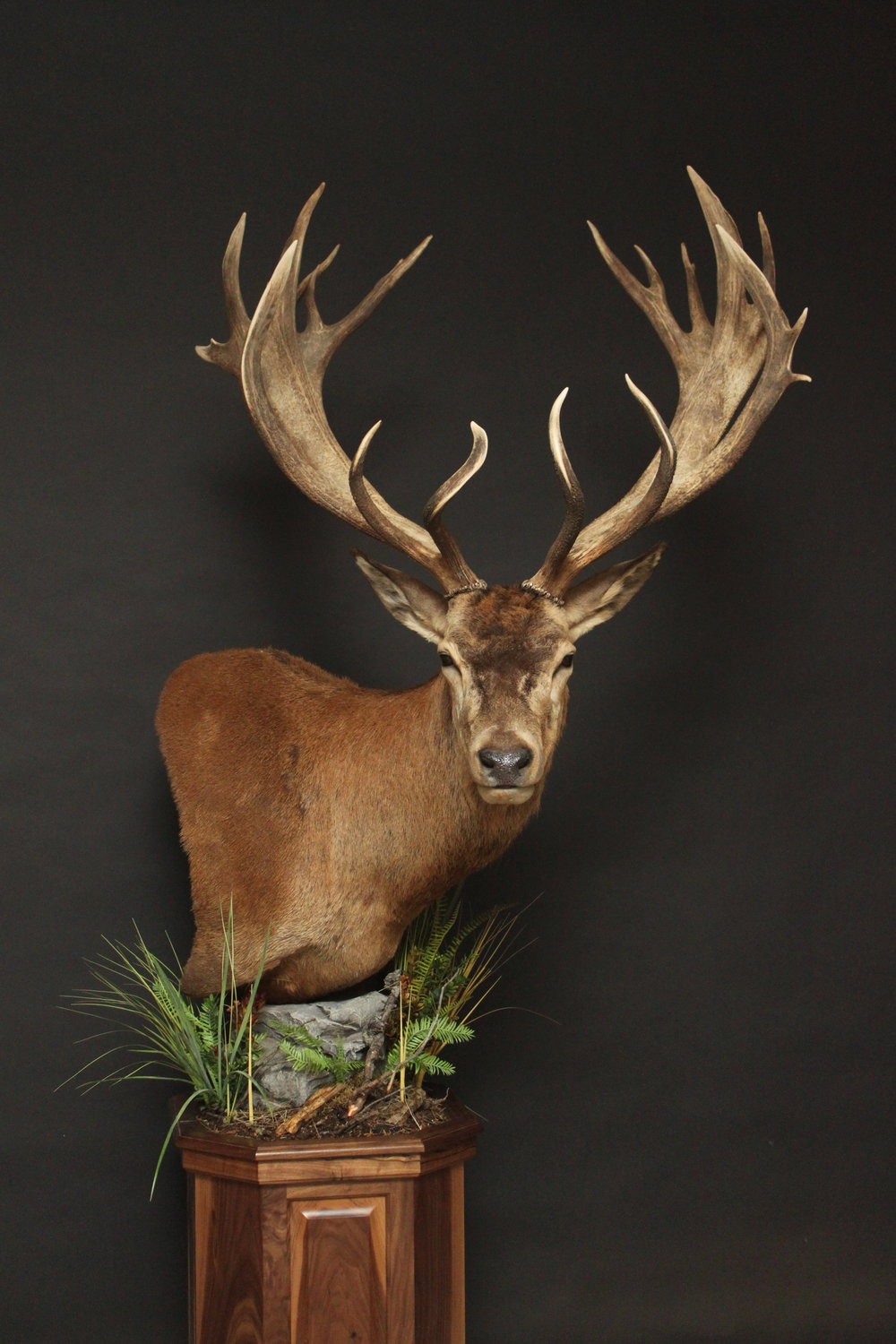 Red Stag (8)