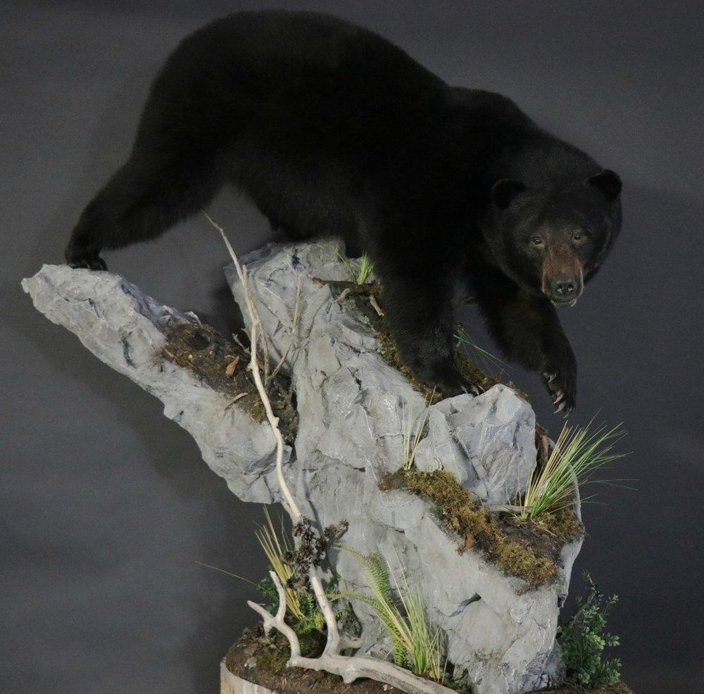 Black Bear 25