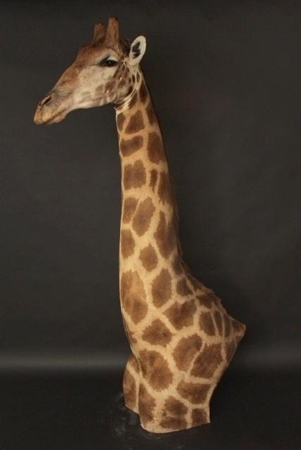 Shoudermount  Giraffe (1)