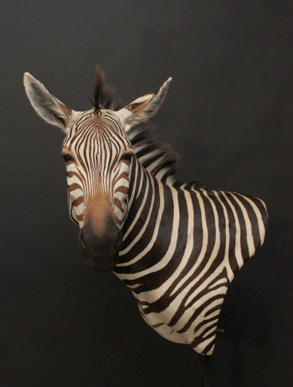 Wall Pedestal  Zebra (1)