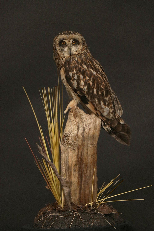 Owl (3).JPG