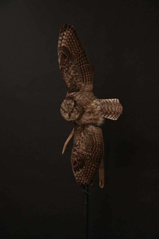 Owl (13).JPG