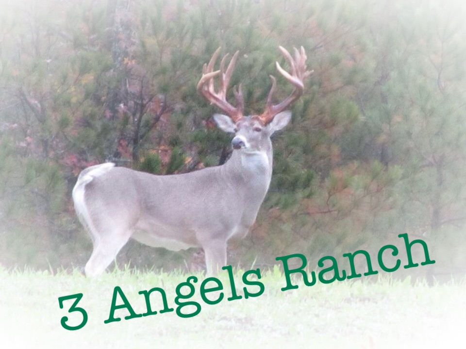 3 Angels Ranch