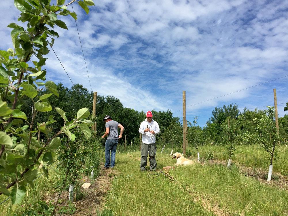 orchard maintenance.JPG