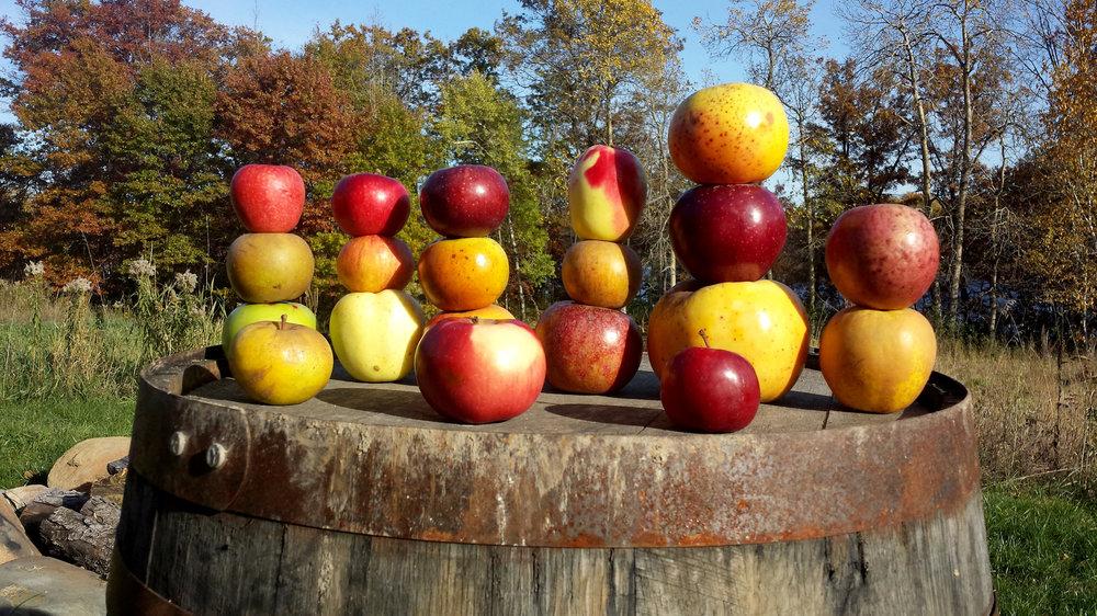 barrel+apple.jpg