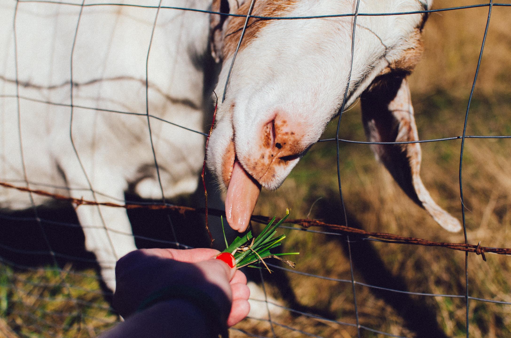 animals-14