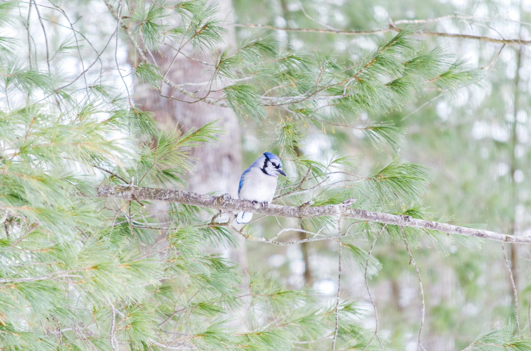 birds-15