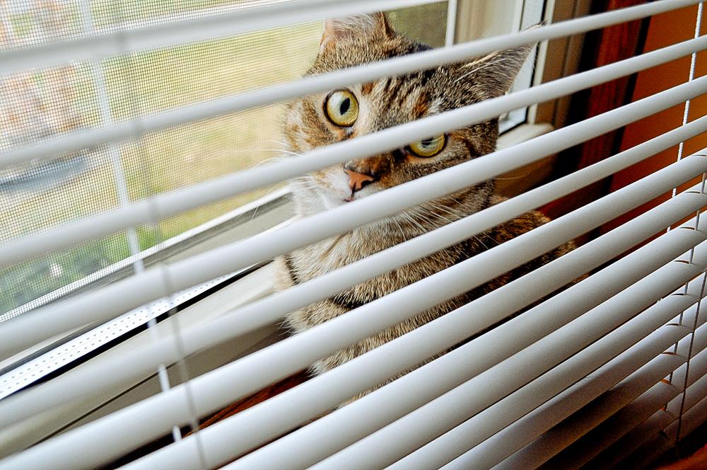 cats-2.jpg
