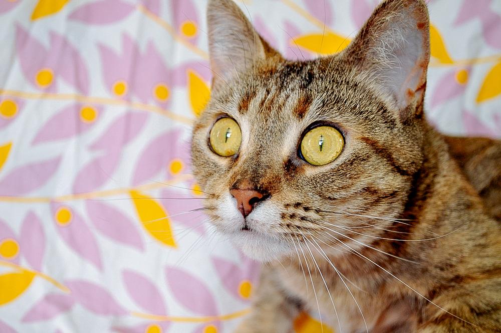 cats-5.jpg