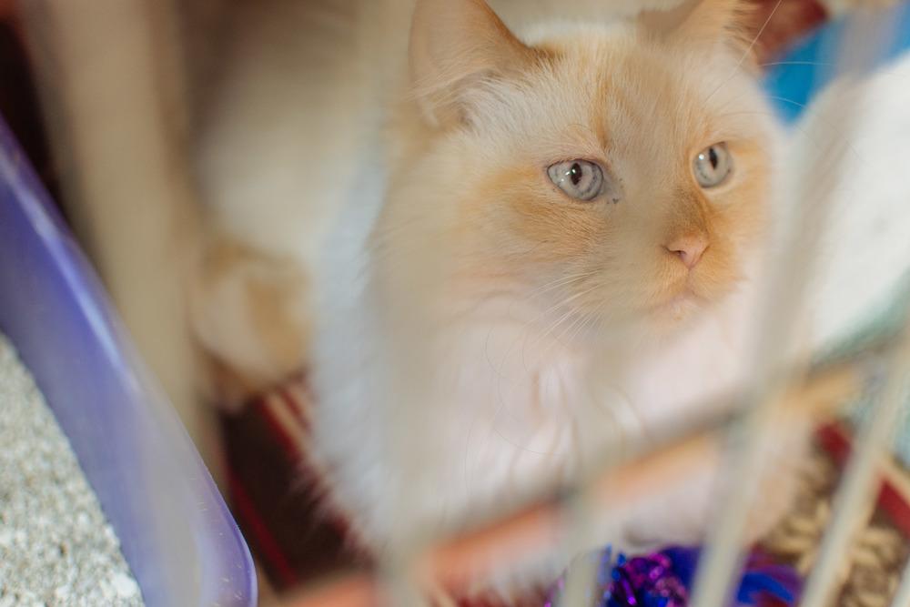 cats-7.jpg