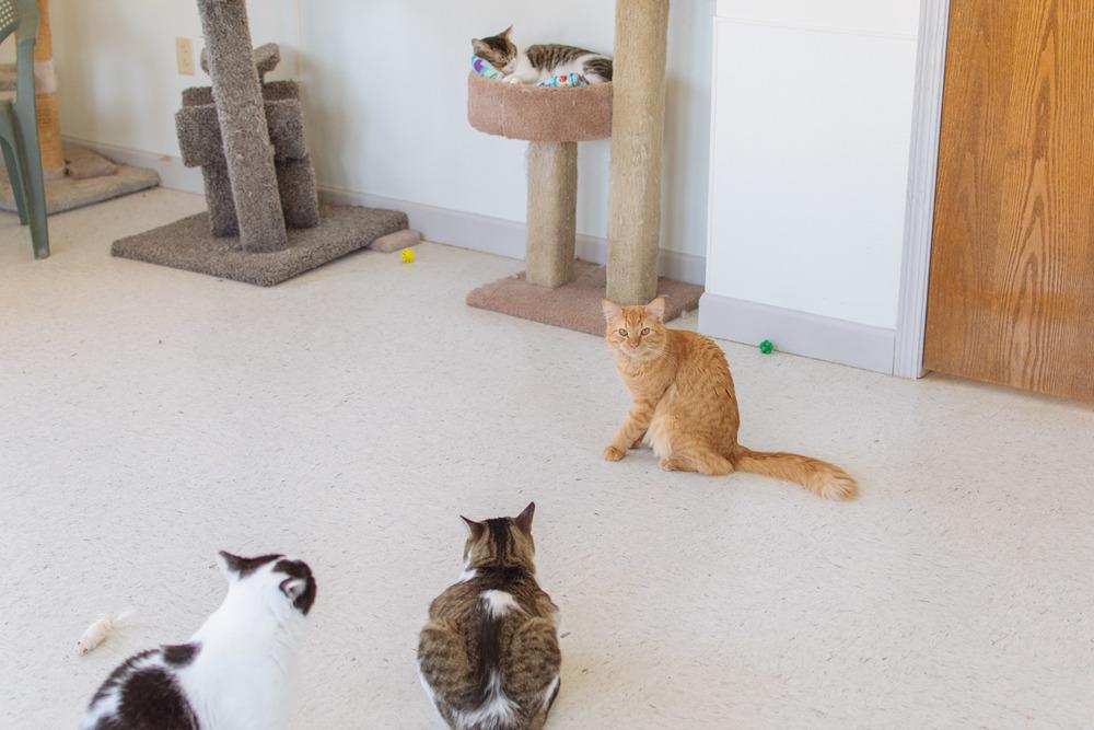cats-18.jpg