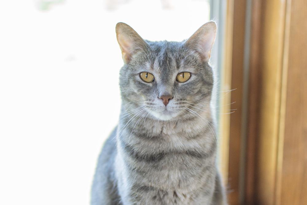 cats-21.jpg