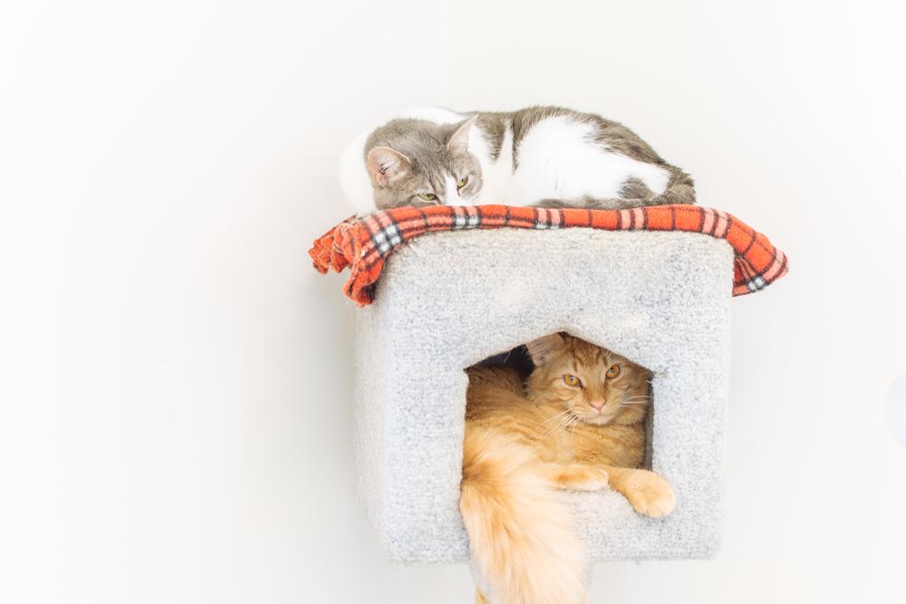 cats-27.jpg