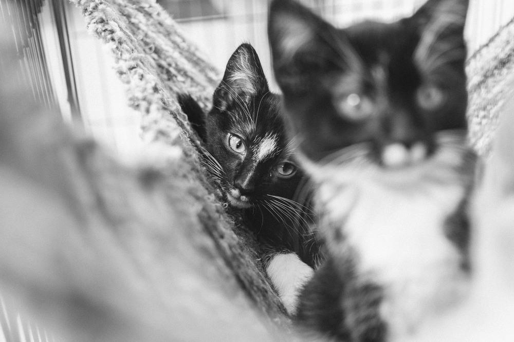 cats-36.jpg