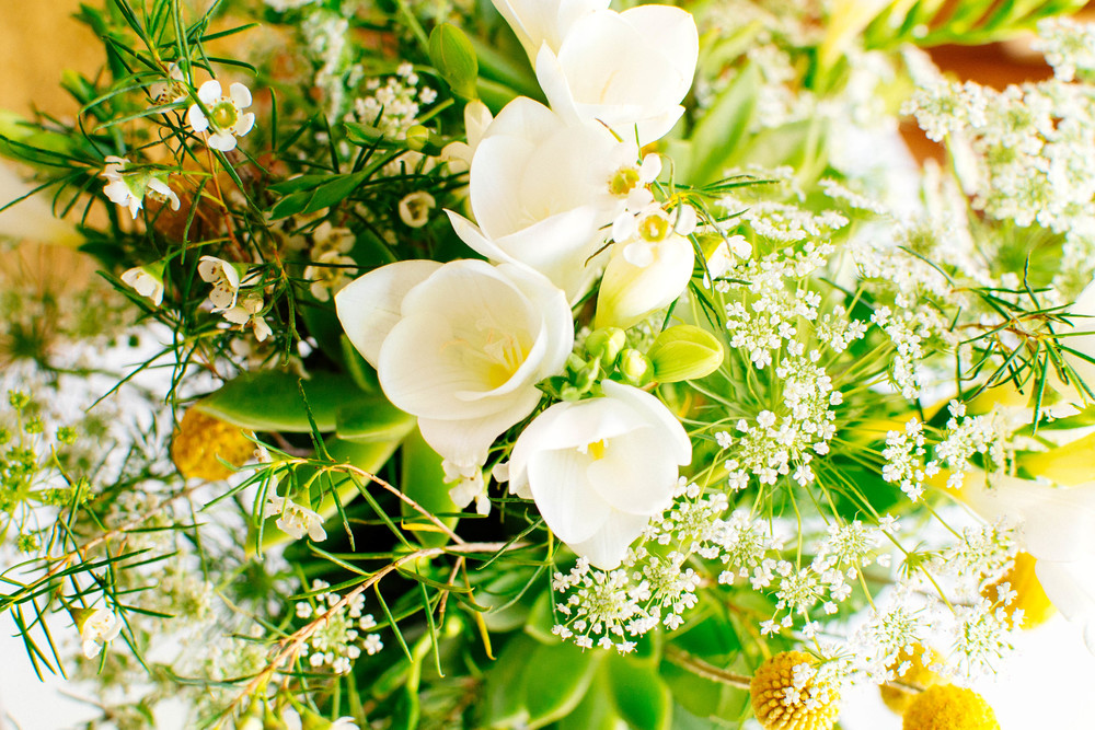 plants-4.jpg