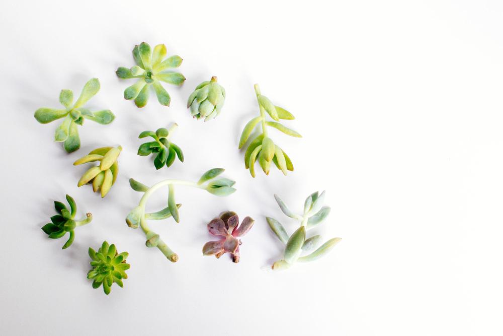 plants-23.jpg