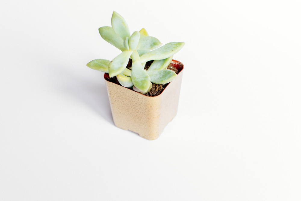 plants-21.jpg