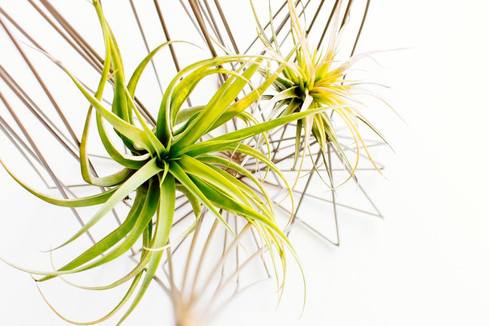 plants-1.jpg
