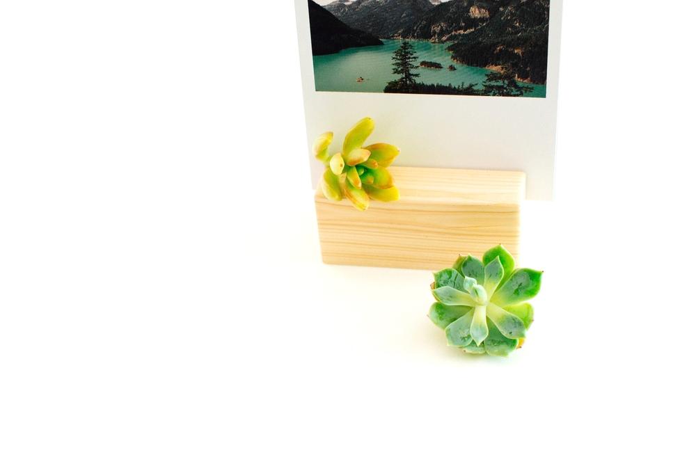 plants1-1.jpg