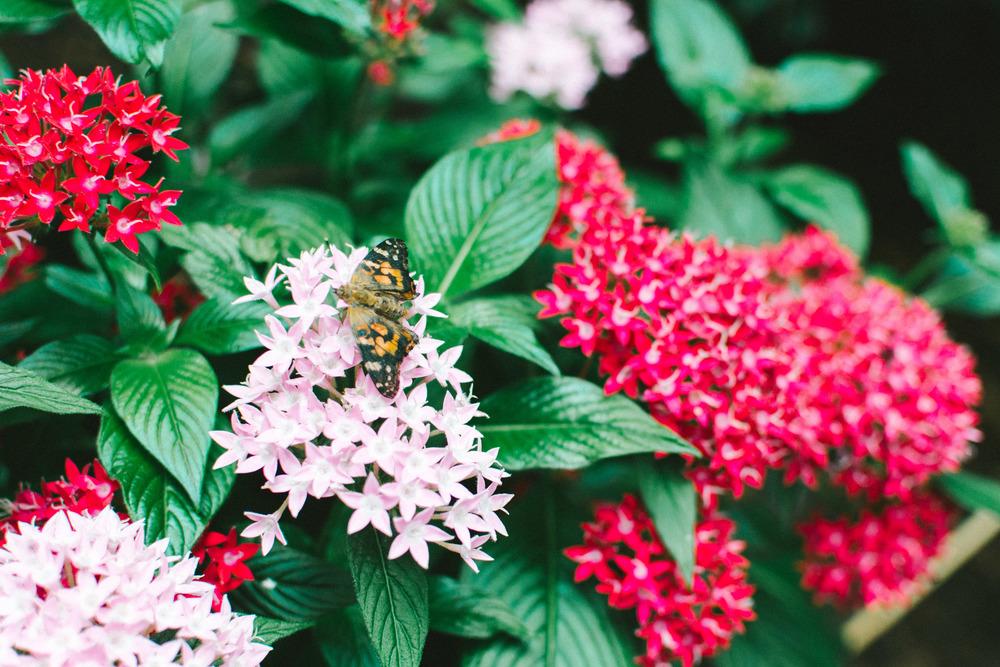 butterflies-5.jpg