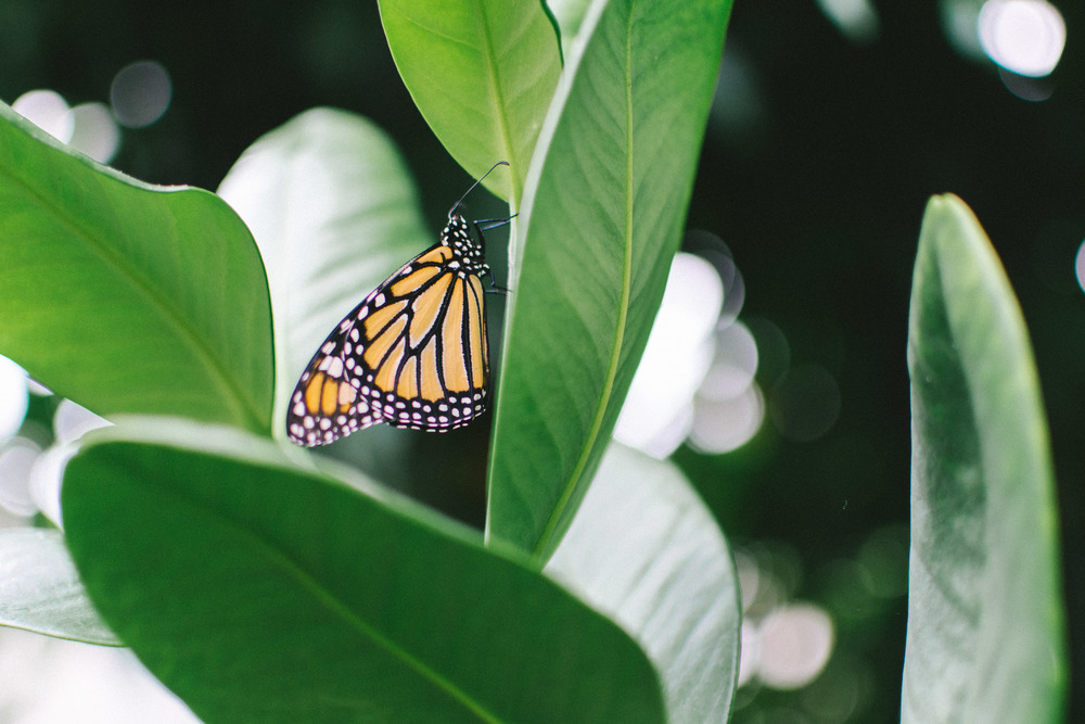 butterflies-8.jpg