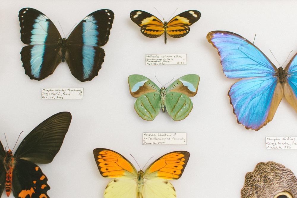 butterflies-22.jpg