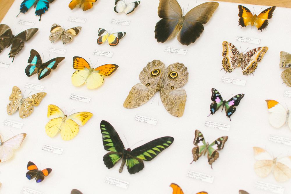 butterflies-23.jpg