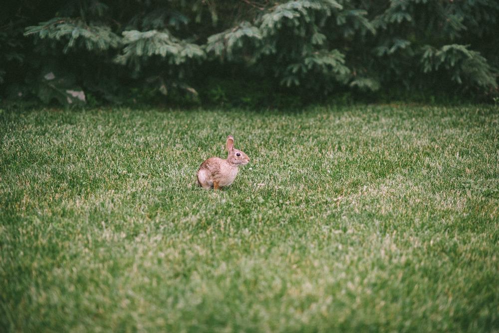 bunny-3.jpg