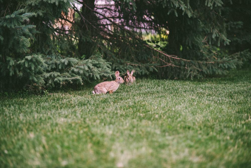 bunny-6.jpg